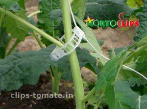 clip-para-el-facil-entutorado-de-los-cultivos-de-tomate-hortoclips