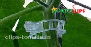 clip-para-la-conduccion-de-los-cultivos-de-tomate-hortoclips
