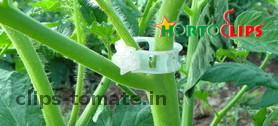 clips-para-tutoramineto-y-soporte-de-cultivos-de-tomate-hortoclips